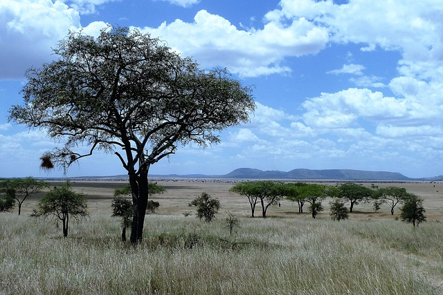 טנזניה – טיול פרטי או טיול מאורגן?